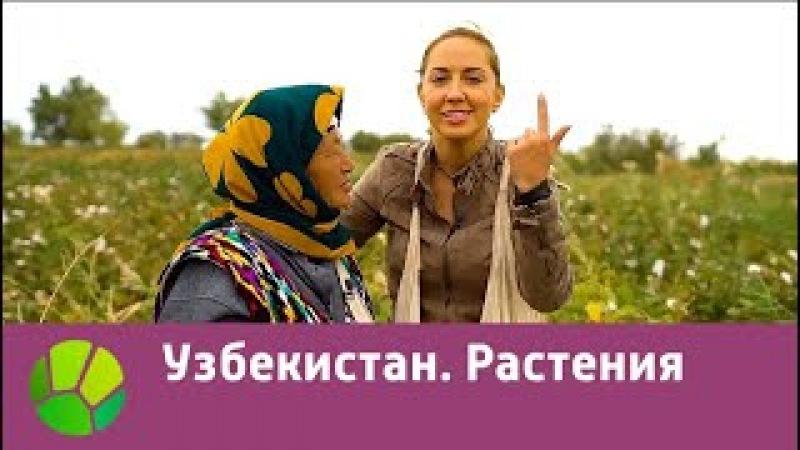 Узбекистан. Растения | Живые символы планеты | Живая Планета