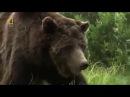 Животный мир. Поле боя. Сила гризли. Грозные волки. Страсти парка. Хищная жизнь. Ц ...