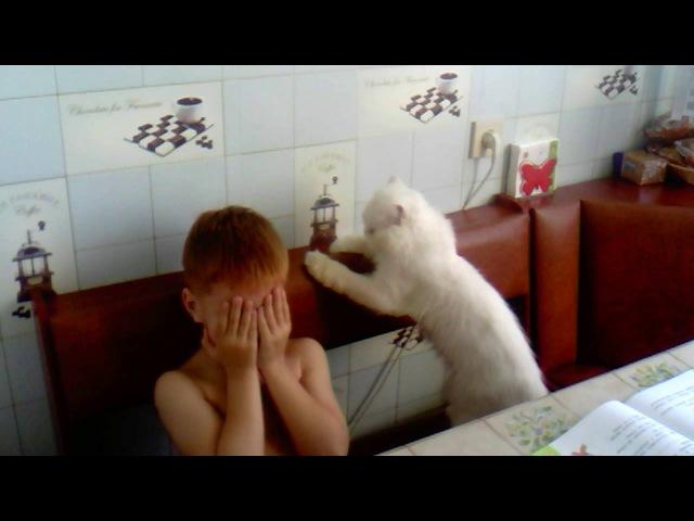 Кот жалеет сына