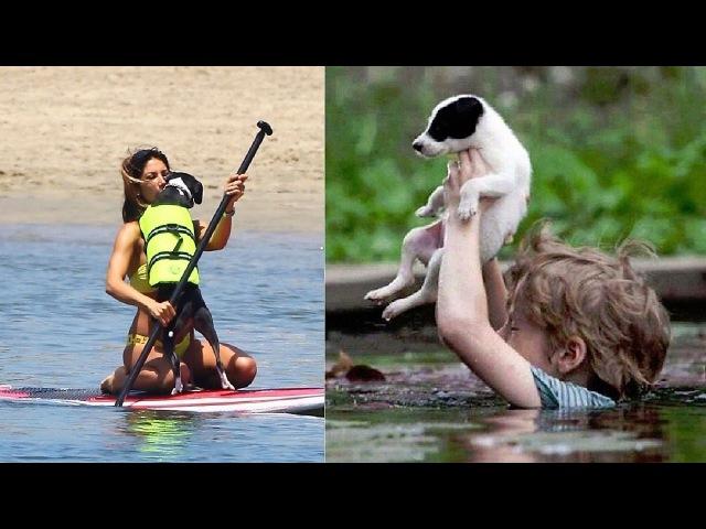 Great People Saving Animals Lives 5