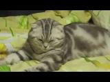 Одеялко. Кошка отрубилась.