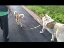 Дрессировка собак. Обучение людей.