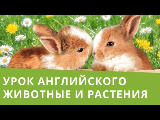 Онлайн курс | Базовый английский | Животные и растения