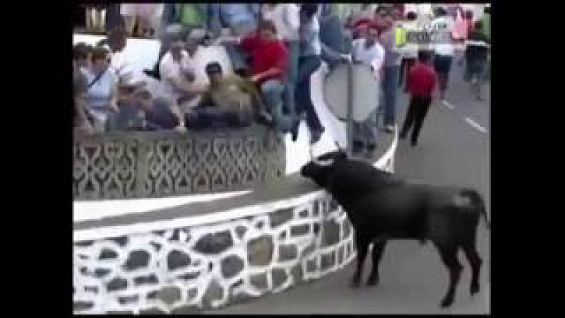The Devvo Chav Bull