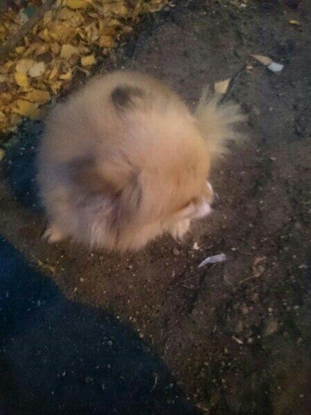 Найдена собака, девочка, возраст около 7 лет. Подобрали на Дмитровском