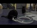 Обитатели «Республики кошек» приняли участие в съемках ролика под трек Satisfaction.
