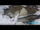В Ржевском лесопарке прорвало трубу ХВС