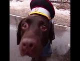 8 февраля в полицейской операции впервые задействовали собаку