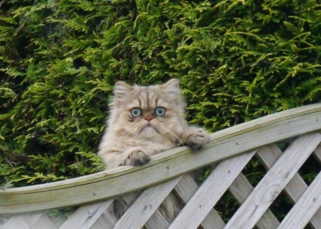 Когда соседский кот увидел тебя, а ты жаришь на решетке рыбу