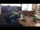 Смешные видео про кошек август 2017