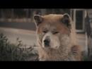 Грустные моменты из фильма Хатико