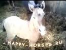 Смешные лошади. Забавный жеребенок