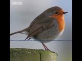 Пять минут красивого пения птиц от Радио Би-би-си 3...Five minutes of beautiful birdsong from BBC Radio 3