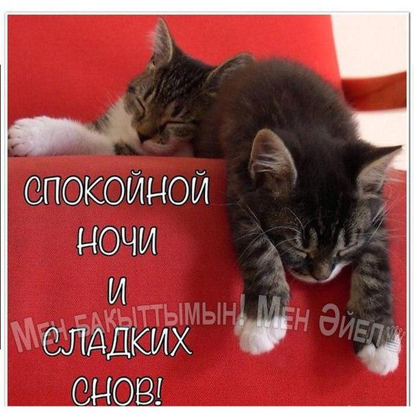 Спокойной ночи нежных снов открытка 64