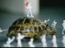 Внимание, черепаха! (1969)