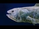 When non-Euclidean Ceolocanths Attack! (Hour of Dark Ambient Original Music Mix)