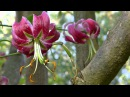 FLOWER CELEBRATION - ERNESTO CORTAZAR - Grande-Ay Amor Ya No Me Quieras Tanto-Contigo-El Dia