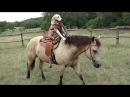 Собака ездит верхом на лошади