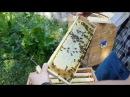 УЛЕЙ ВЕЛИКОРУСЬКИЙ Часть 6 Медосбор Beekeepers Honeybees Beehives ミツバチ