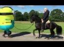Самые смешные ПРИКОЛЫ С ЛОШАДЬМИ, Смешные лошади Funny horse