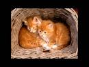 Котята детская песня Kittens Children's Song домашние животные