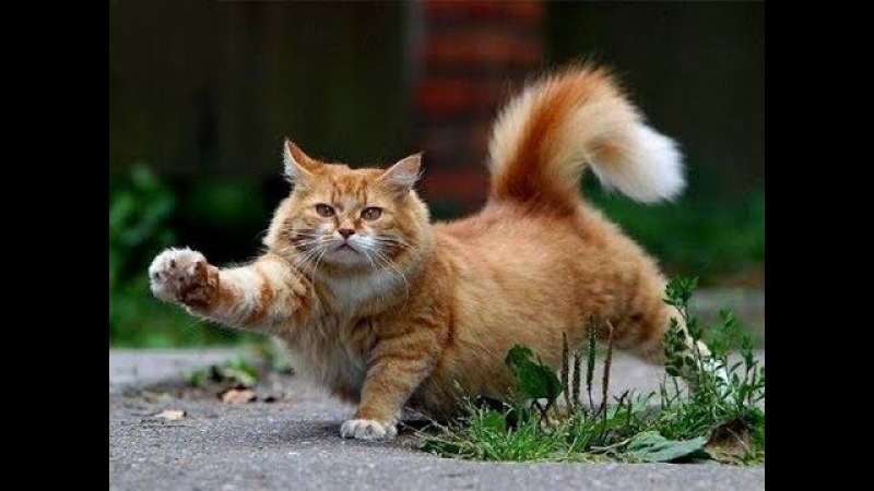 A rabid cat-Бешеный кот