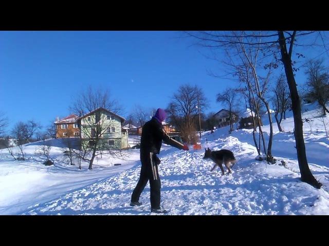 Njemacki Ovcar Igra na snijegu , German Shepherd Game on the snow