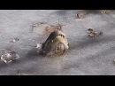 WATCH: Here's How Gators Breathe in Frozen Swamps
