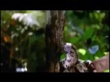 Фильм Тайна Приключения на Амазонке приключения, фэнтези