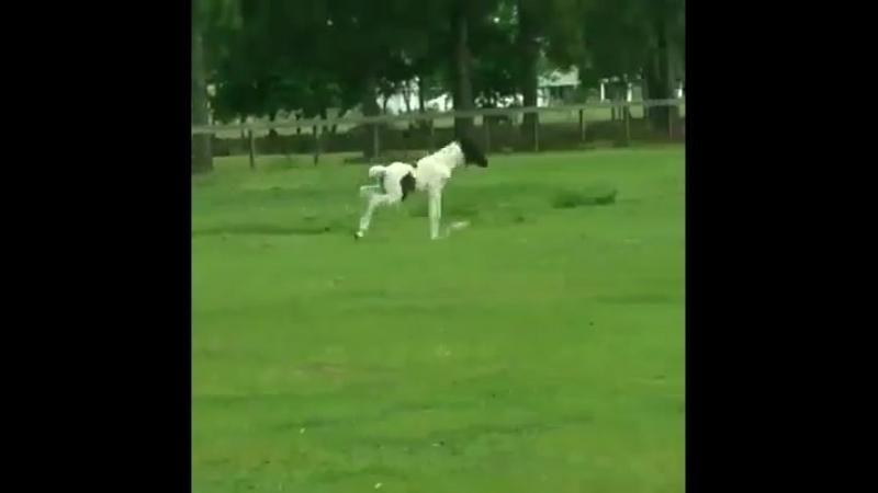 Эти лошадки такие неугомонные!??