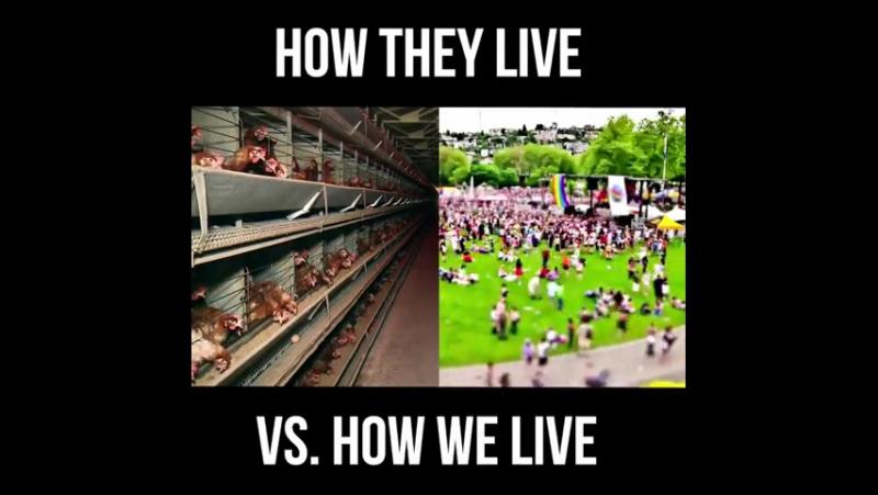 Жизнь человека (промышленное животноводство)