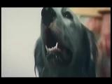 Владимир Минеев-Доверчивый пёс (саундтрек к фильму-Белый бим чёрное ухо)