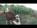 Будни деревенщины ⁄⁄ Заготовка кормов ⁄⁄ Купили зерно