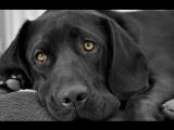 Самые преданные собаки в мире! Собаки верные друзья. Топ самых преданных_ животные, существа, породы