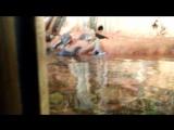 Эльдар Богунов смотрит, как сурки плавают