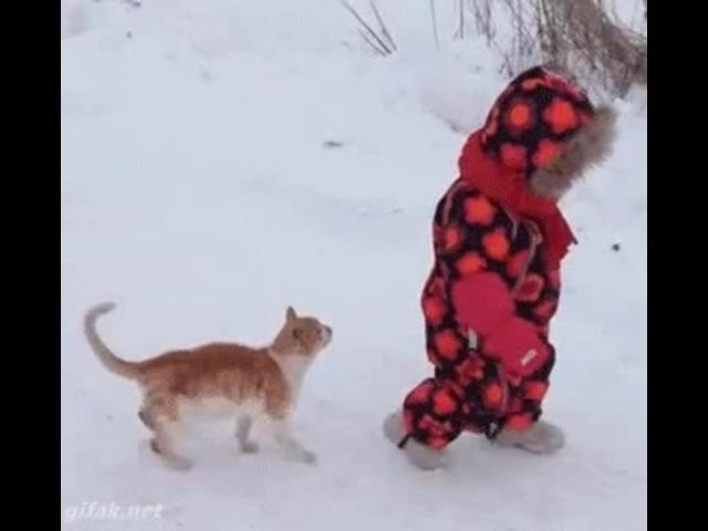 😺 Cat vs Baby 👶
