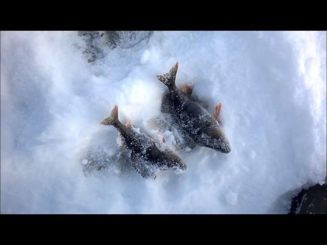 Зимняя рыбалка на о.Сандал в Карелии. Знакомство с Саней и каналом Raslabon)