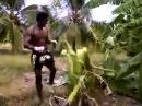 Тайский боксер Буакав лучший боец мира в весе