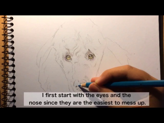 How To Draw Poodle Curly Fur Tutorial