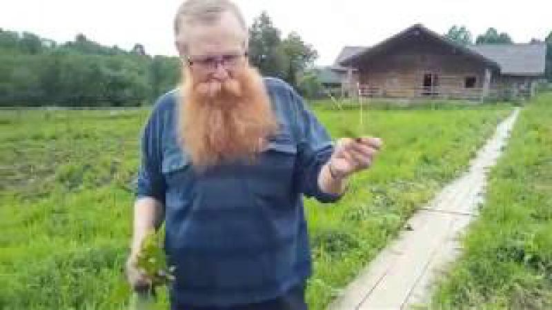 Мастер-класс по траволечению в слободе Германа Стерлигова 15.07.2026