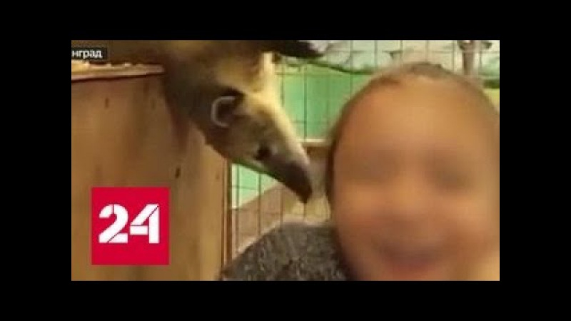 Цинизм и антисанитария как в контактных зоопарках издеваются над животными