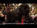 Питомник Кавказских овчарок. ПРОДАЖА ЩЕНКОВ. www.r- 79262205603 ТАТЬЯНА ЯГОДКИНА