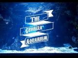 My Trip to Georgia Aquarium, Atlanta, USA ( World's Largest)  Atlanta GA