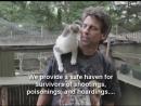 Коты помогли ему пережить ужасную потерю… Мужчина создал приют для 300 животных в память о сыне!