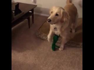 Парень сделал живую копию любимой игрушки собаки.