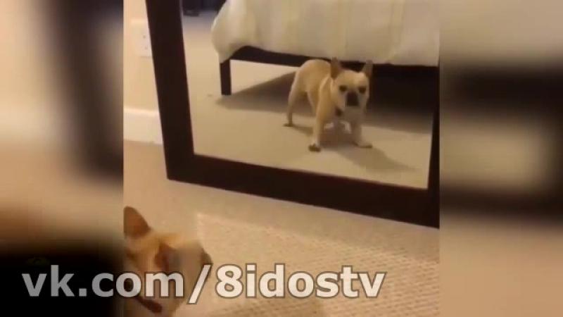 Интересно с зеркалом играть