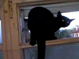 Гавкающий кот (6 sec)