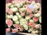 Кустовые бело-кремовые розы