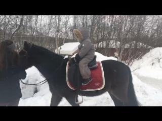 Тема на лошади
