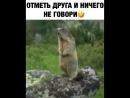 Суслик поёт 😂